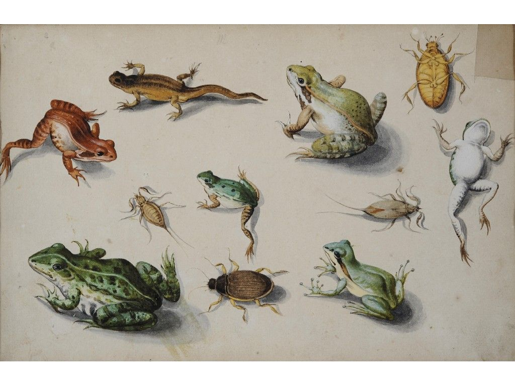 jan van kessel studies of frogs a newt and insects porcelaine