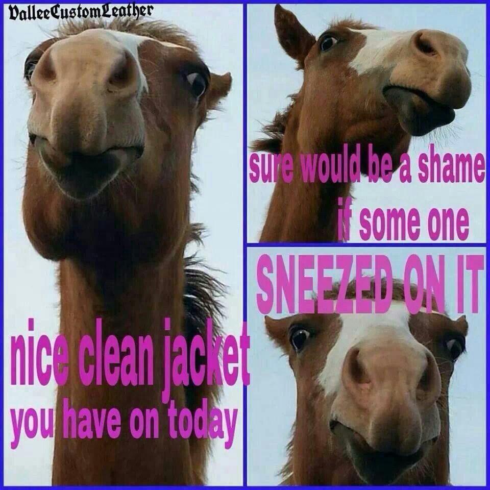 So True Funny Horse Memes Horse Jokes Funny Horses