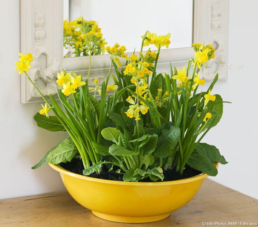 Bulbes de printemps en pot 5 idées d'association