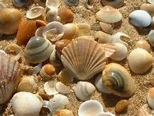 Picking Up Seashells - Saferbrowser Yahoo Image Search Results