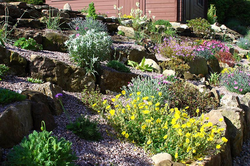 Amazing Alpine Garden Design Spring Pinterest Alpine Garden Simple Alpine Garden Design