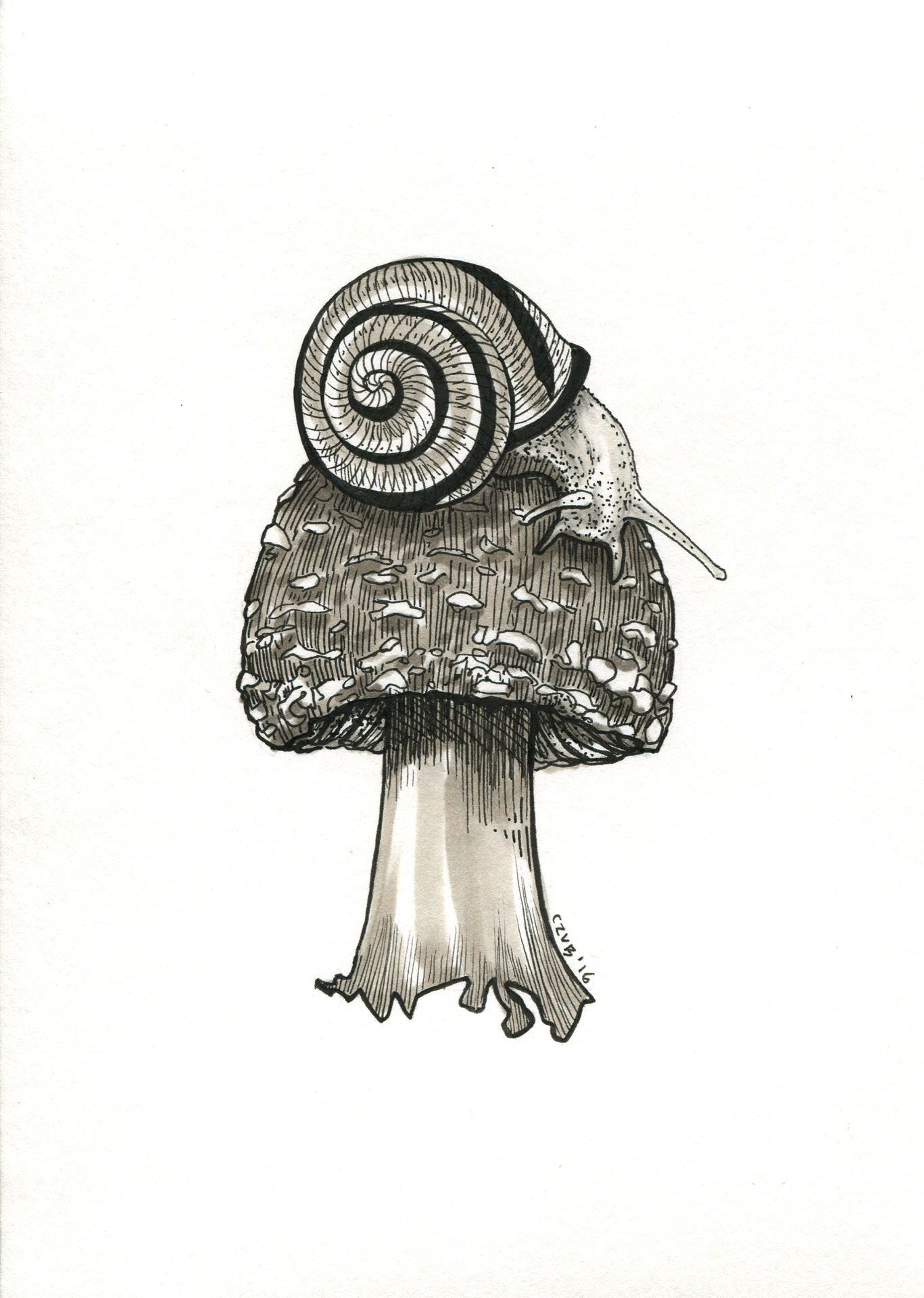 #snail #mashroom #black and white #drawing #illustration #tattoo #design