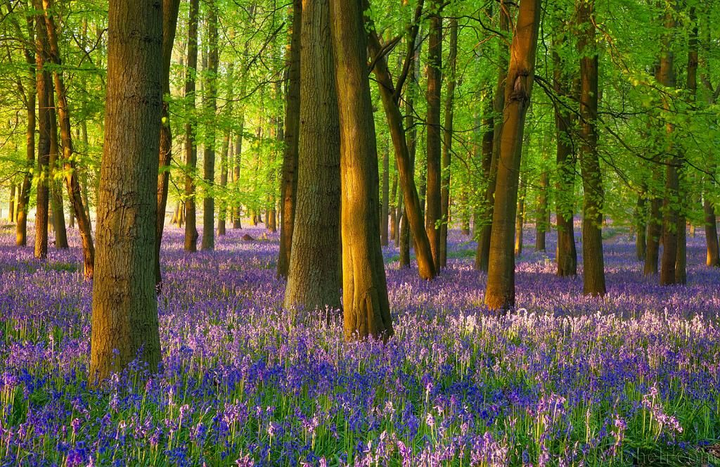 The Woods Forest Ashridge Forest United Kingdom Tags