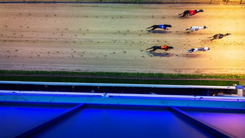 "95af5379c492 Timeform Greyhound SmartPlays: Monday 25 March Timeform provide selections  from Nottingham on Monday… ""Successful at Sheffield last month, she was  back on ..."