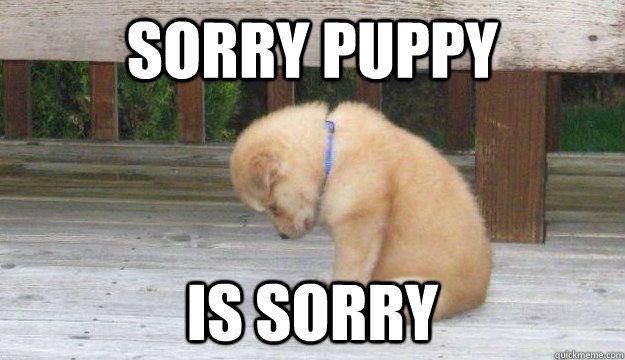 3817c0bff2f1ff4f933a3780478a44b6 sorry puppy is sorry memes pinterest puppy meme, baby