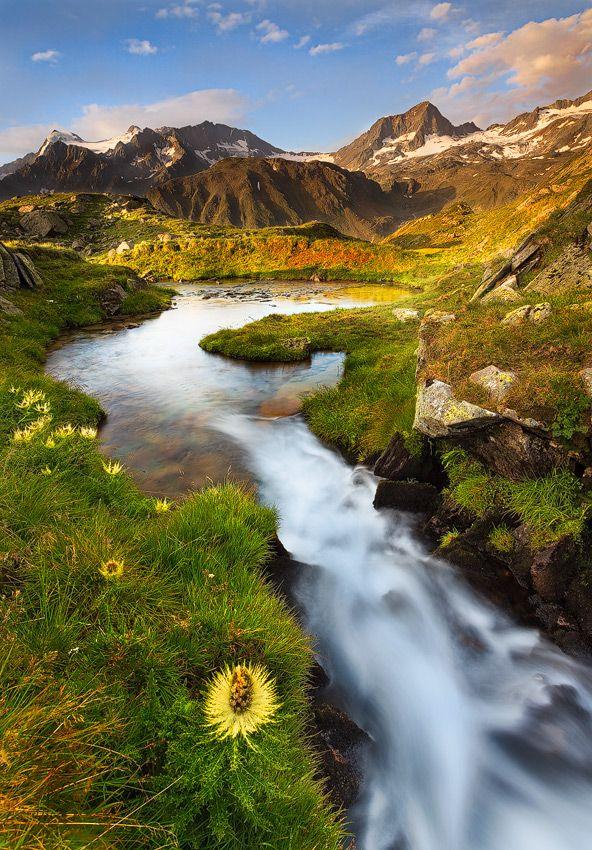 Alpine thistle with lightened peaks of the Stubai Alps, Austria