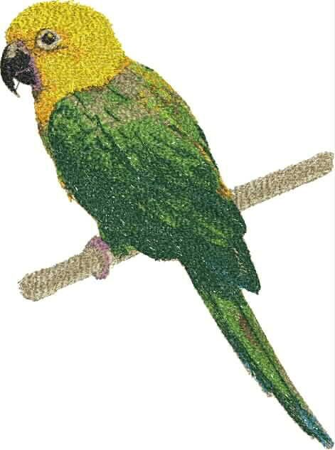 Yellow Green Parrot photo stitch free embroidery design - Photo stitch embroidery designs - Machine embroidery community