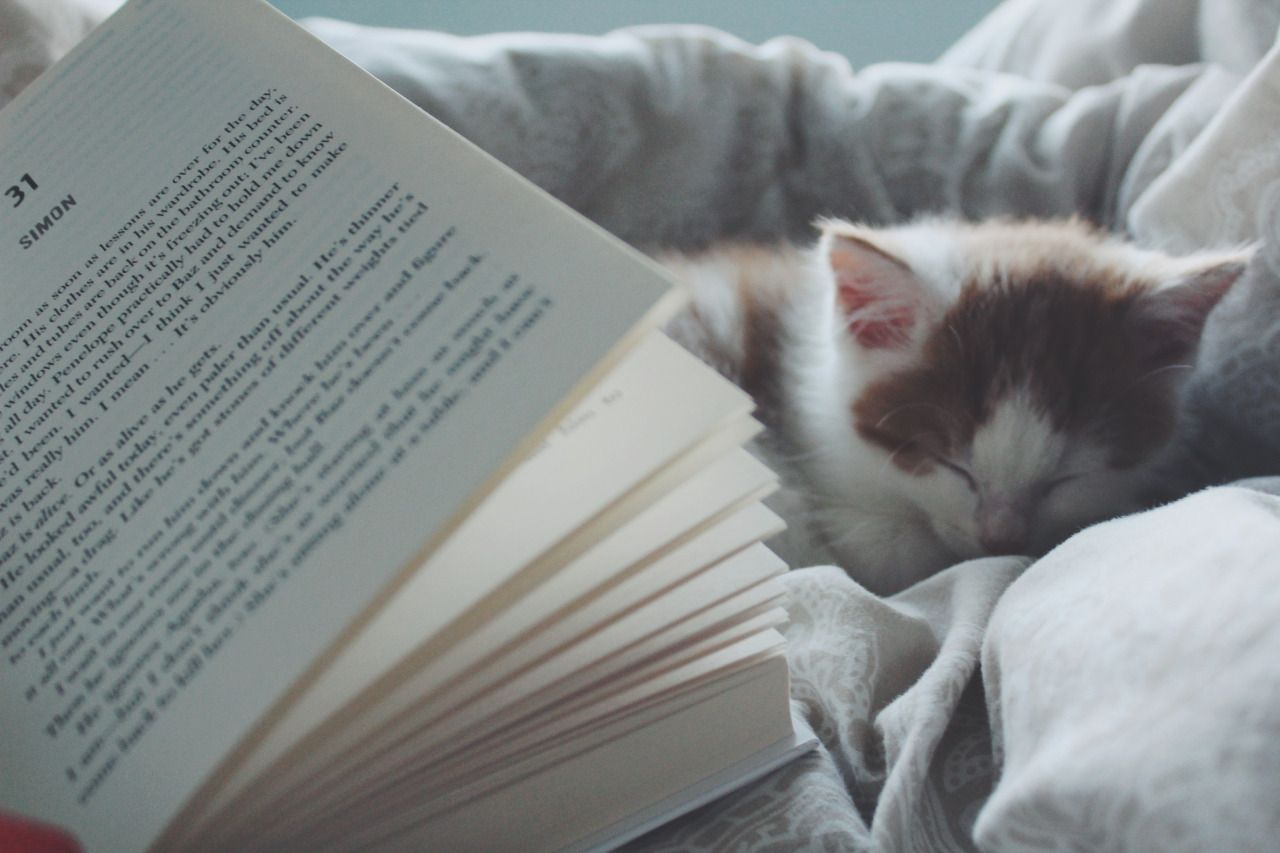Book Owl Madness Day 9 Cozy Reading Time Cuddles With My Kitten And Rainbow Rowell Is Probably The Best Way To Spend This Ra Books Reading Rainbow Reading