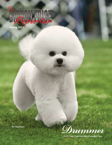 Bichon Frise Pros Hypoallergenic Cute And Fluffy Good For Apartments And The Name Means Curly Lap Dog Wh Bichon Frise Dogs Bichon Frise Puppy Bichon Frise