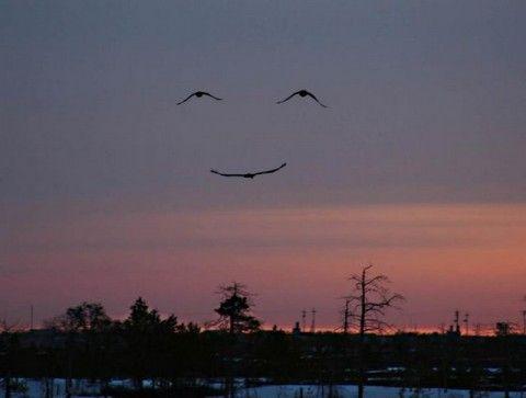 nature smiling