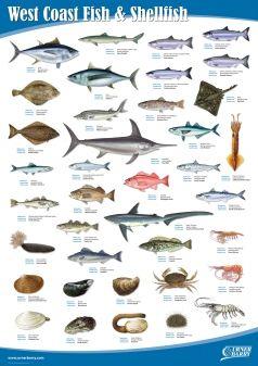 West Coast Fish And Shellfish Freshwater Aquarium Fish Fish List Of Animals