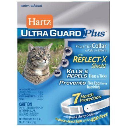 Pets Cats Kittens Fleas Kittens