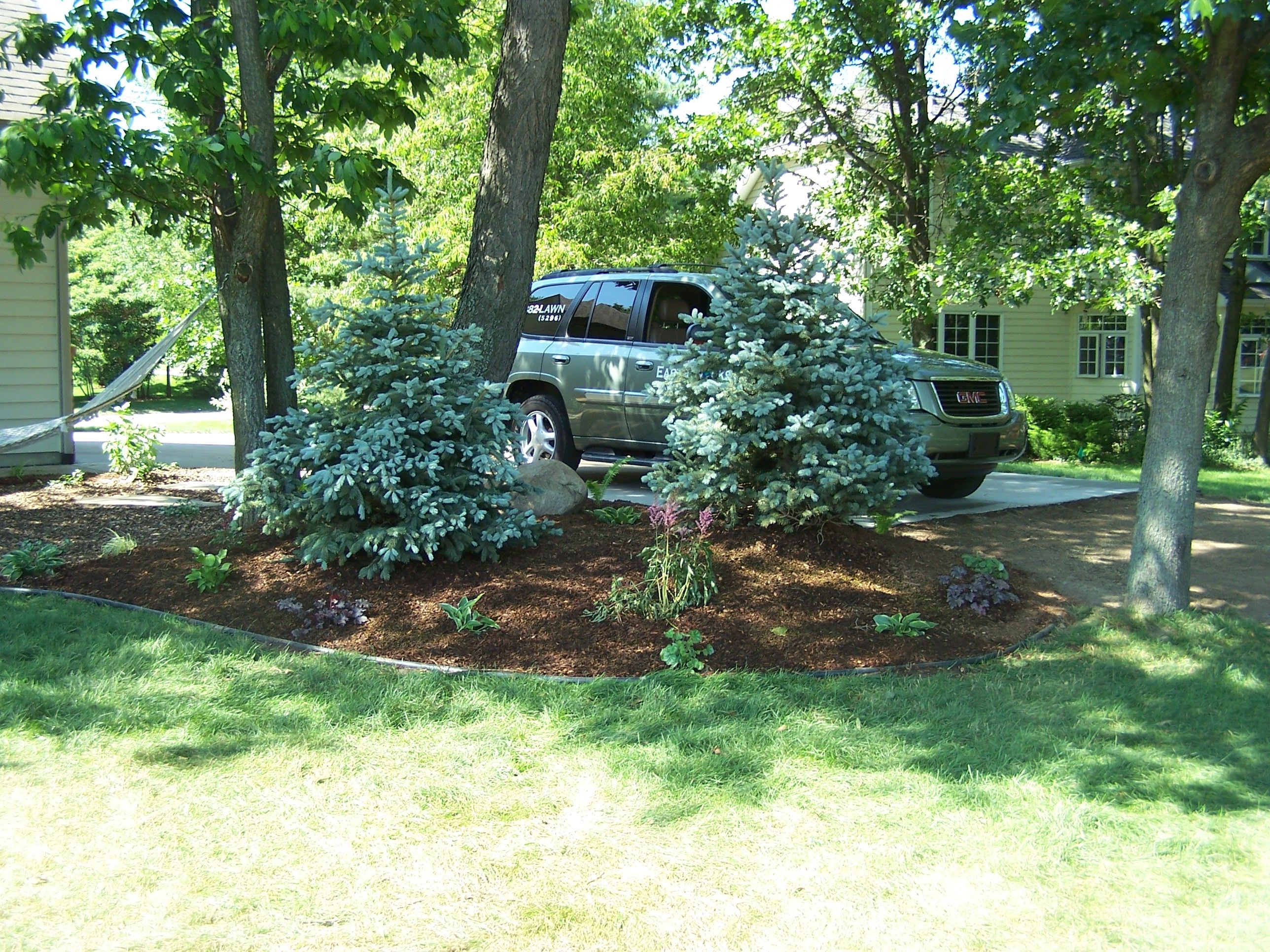 Pictures Of Landscaping With Spruce Trees 57