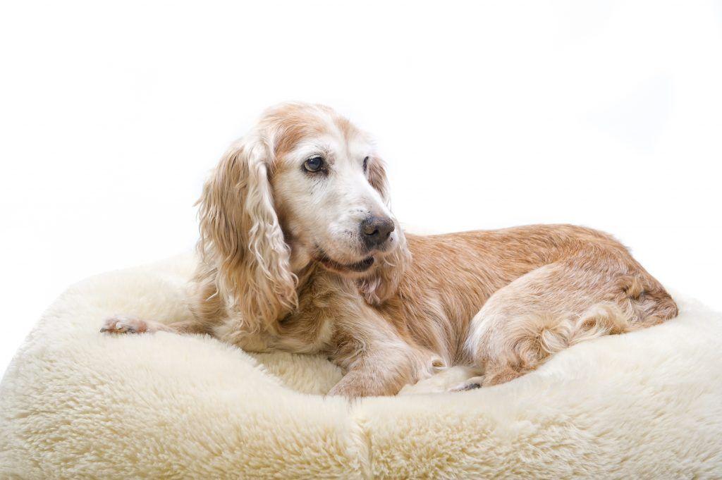 Understanding Arthritis in Pets   Pet arthritis, Dog skin, Skin tag