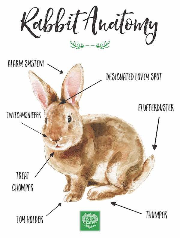 Sweet Rabbit Anatomy Print Cute Bunnies Pinterest Anatomy