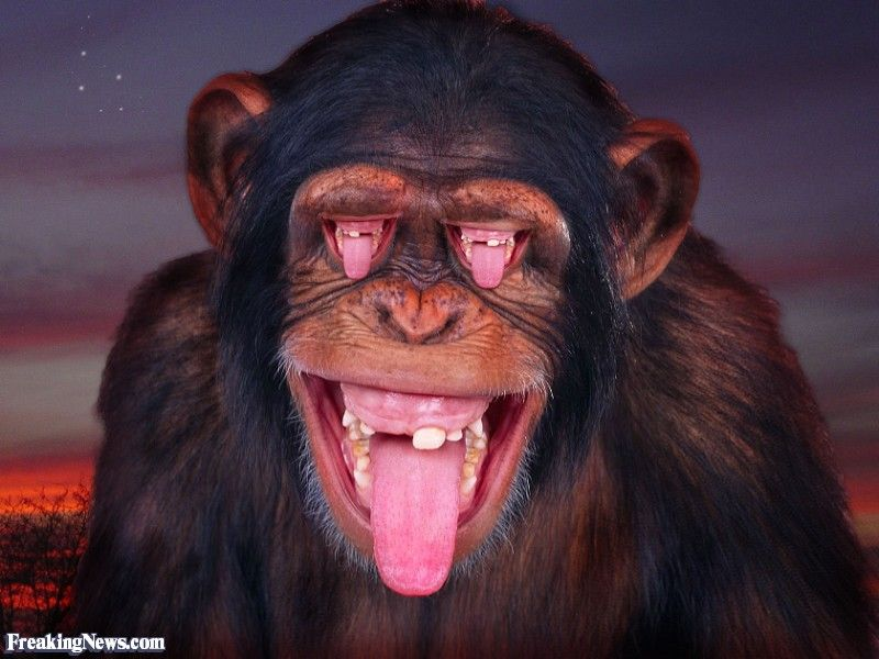 Monkey Mouth Eyes Monkey Pictures Monkeys Funny Funny Monkey