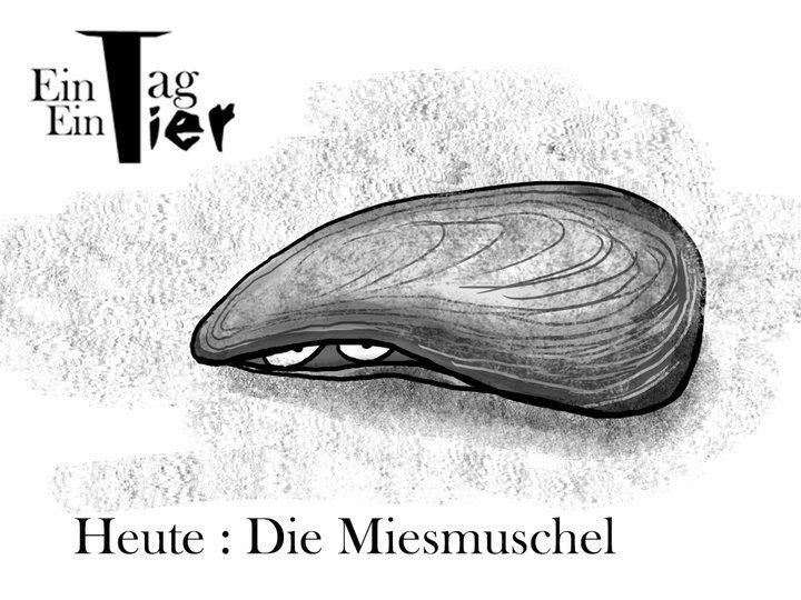 #miesmuschel