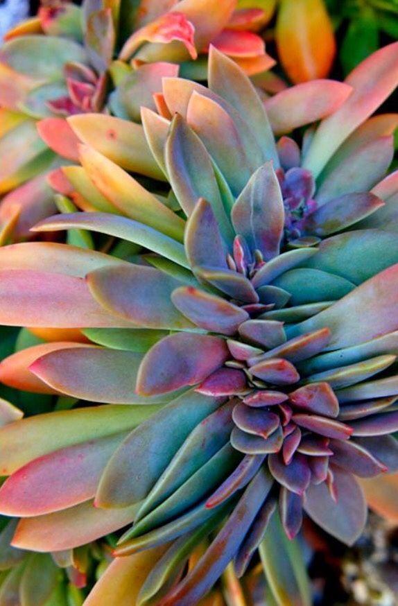 Rainbow House Plants For The Win Acuarelas Planting 400 x 300
