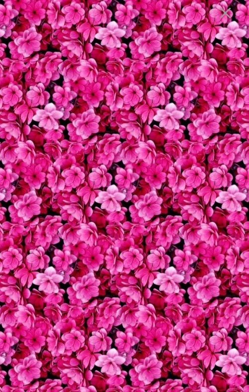 Flowers pink and wallpaper image backup backdrops pinterest flowers pink and wallpaper image mightylinksfo Image collections