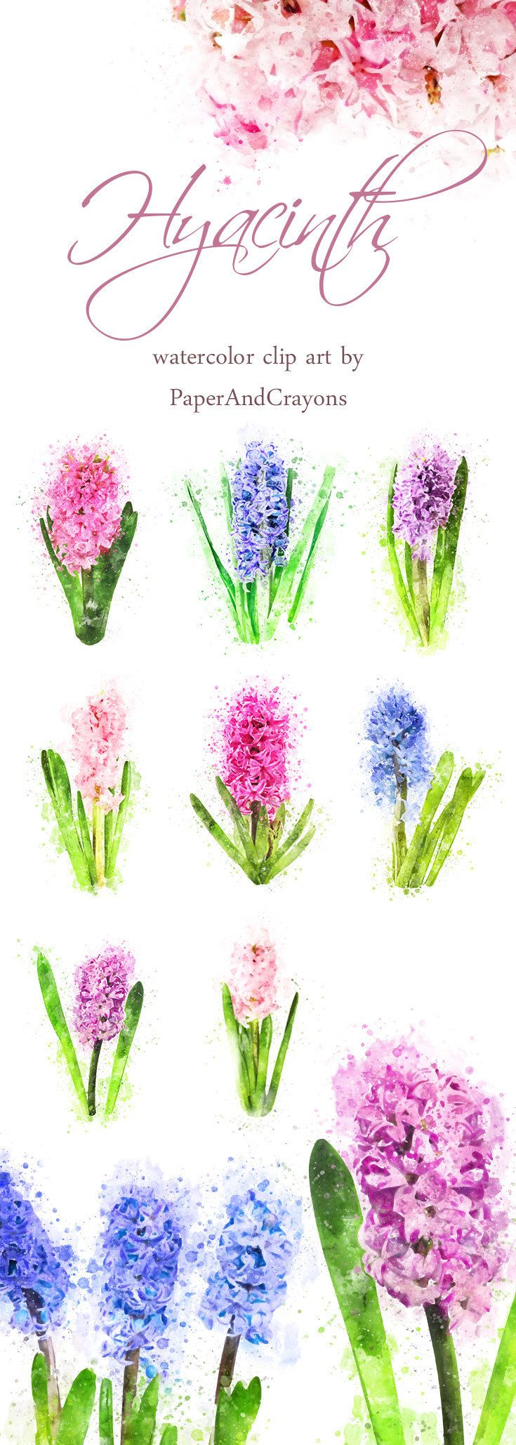 Hyacinth floral clipart spring watercolor clipart flower