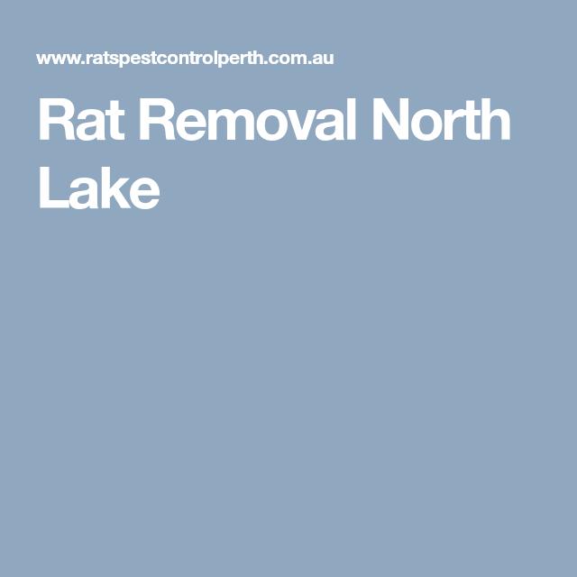 Rat Removal North Lake Rats, Rat pest control, Pest control
