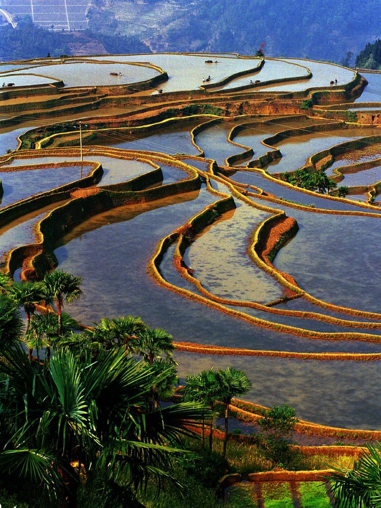China the cultural landscape of honghe hani rice for Terraced landscape definition
