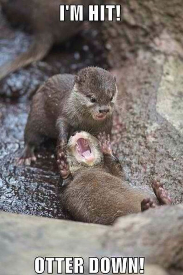 Otter Down Funny Animals Animal Captions Funny Animal Memes,Off White And Brown Living Room