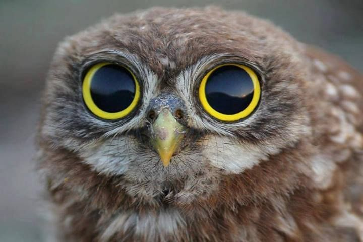 Pix For > Owl Eyes