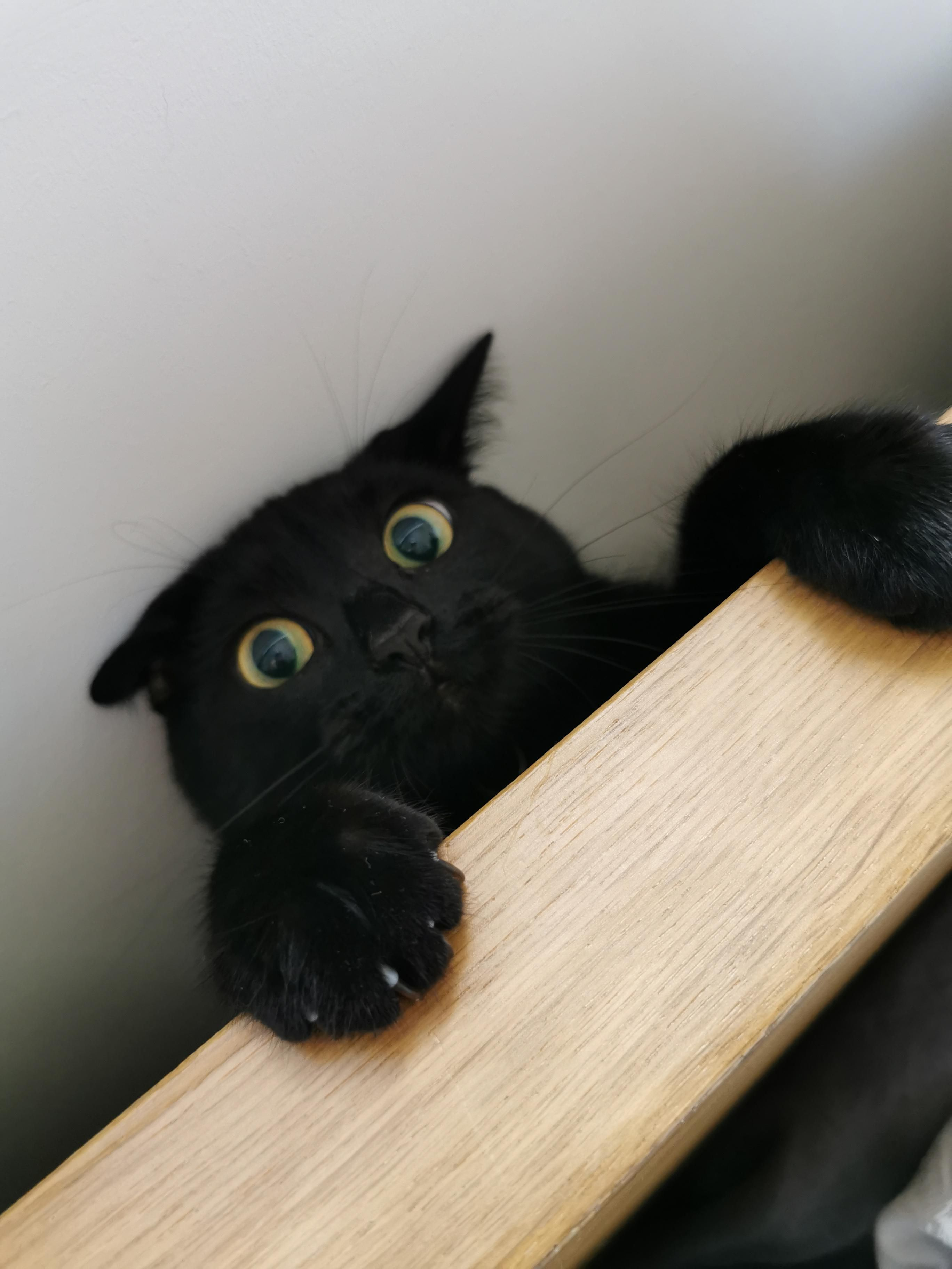 This Is The Face Of Bad Decision Making She Got Stuck Behind The Bed Aww Cat Cats Cute Funny Animals Cute Baby Animals
