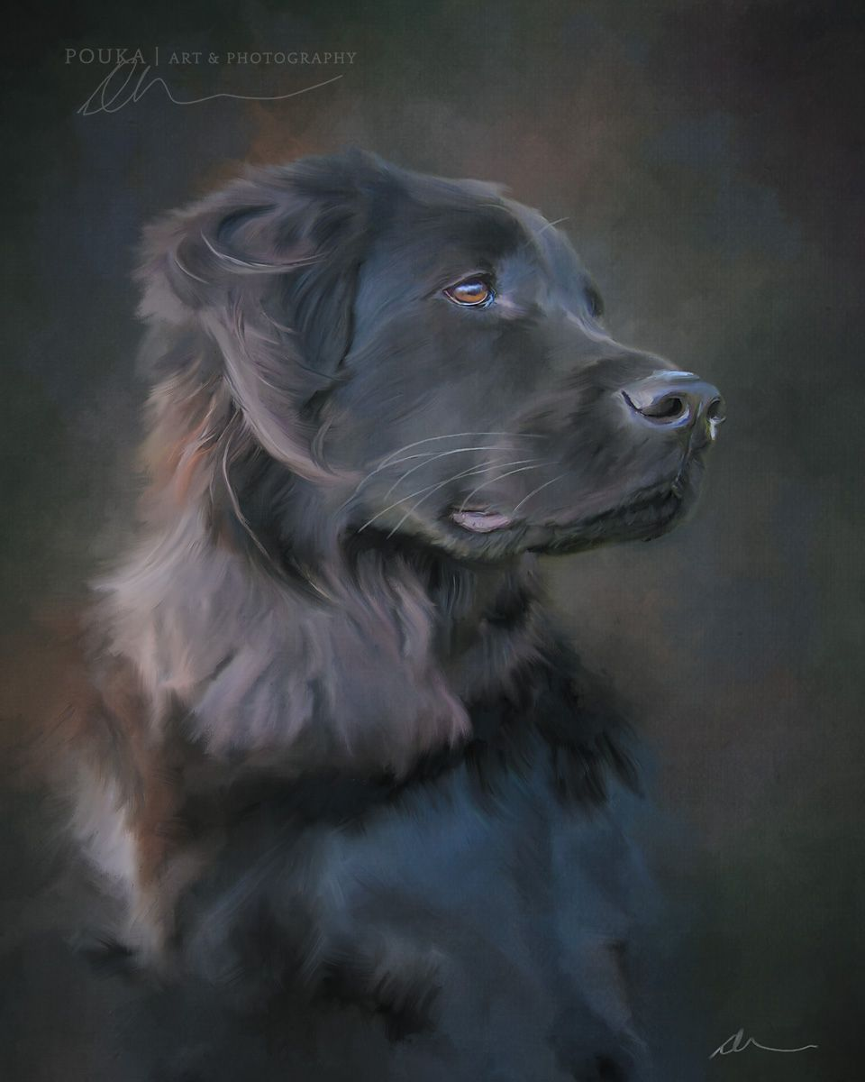 Digital Painting Of A Black Dog By Pouka Art Photography Dog Portraits Painting Oil Cat Portrait Painting Dog Portraits Painting