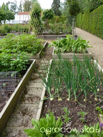 Pin By Iza Pietras On House And Garden Vegetable Garden Design Backyard Vegetable Gardens Garden Design