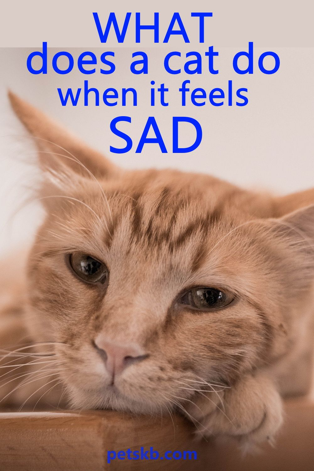 Investigating Cat Crying Do Cats Cry Real Tears Funny Cute Cats Cat Crying Cats