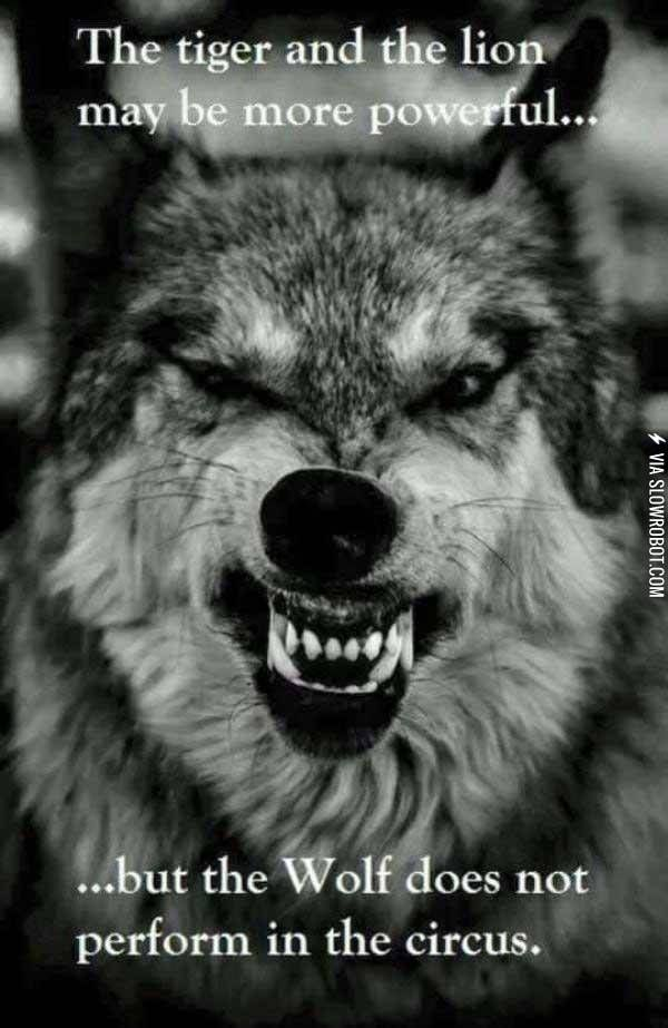 Inspirational Strength Wolf Quotes : inspirational, strength, quotes, Strength, Pack., Quotes,, Warrior, Badass, Quotes