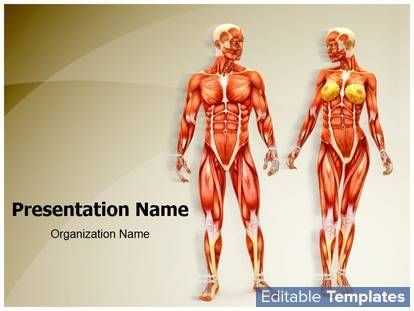 Men And Women Muscular Anatomy Powerpoint Presentation Templates