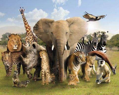 ik word gefascineerd door wilde dieren