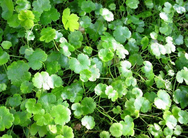 Pekarangan Rumah Sudah Seharusnya Dimanfaatkan Untuk Menanam Berbagai Jenis Tumbuhan Baik Itu Tanaman Hias Tanaman Buah Tanaman Obat Tanaman Perkebunan Sayur