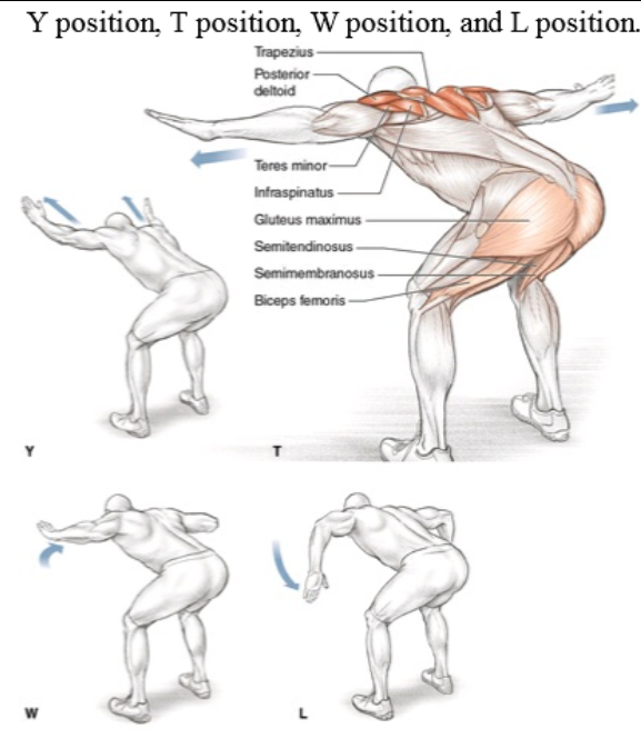 Muscles Involved Primary: Lower trapezius, middle trapezius, rotator cuff musculature (infraspinatus, teres minor), posterior deltoid Secondary: Hamstrings (biceps femoris, semitendinosus, semimembranosus), gluteus maximus  #homeworkout #workout #nogym #trapezius #backtobasic #fit #strong