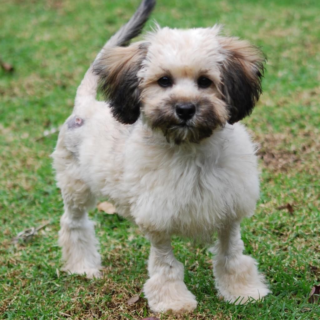 GayWeHo Dogs 4 U 🐶 on Dogs, Lhasa apso, Terrier mix dogs