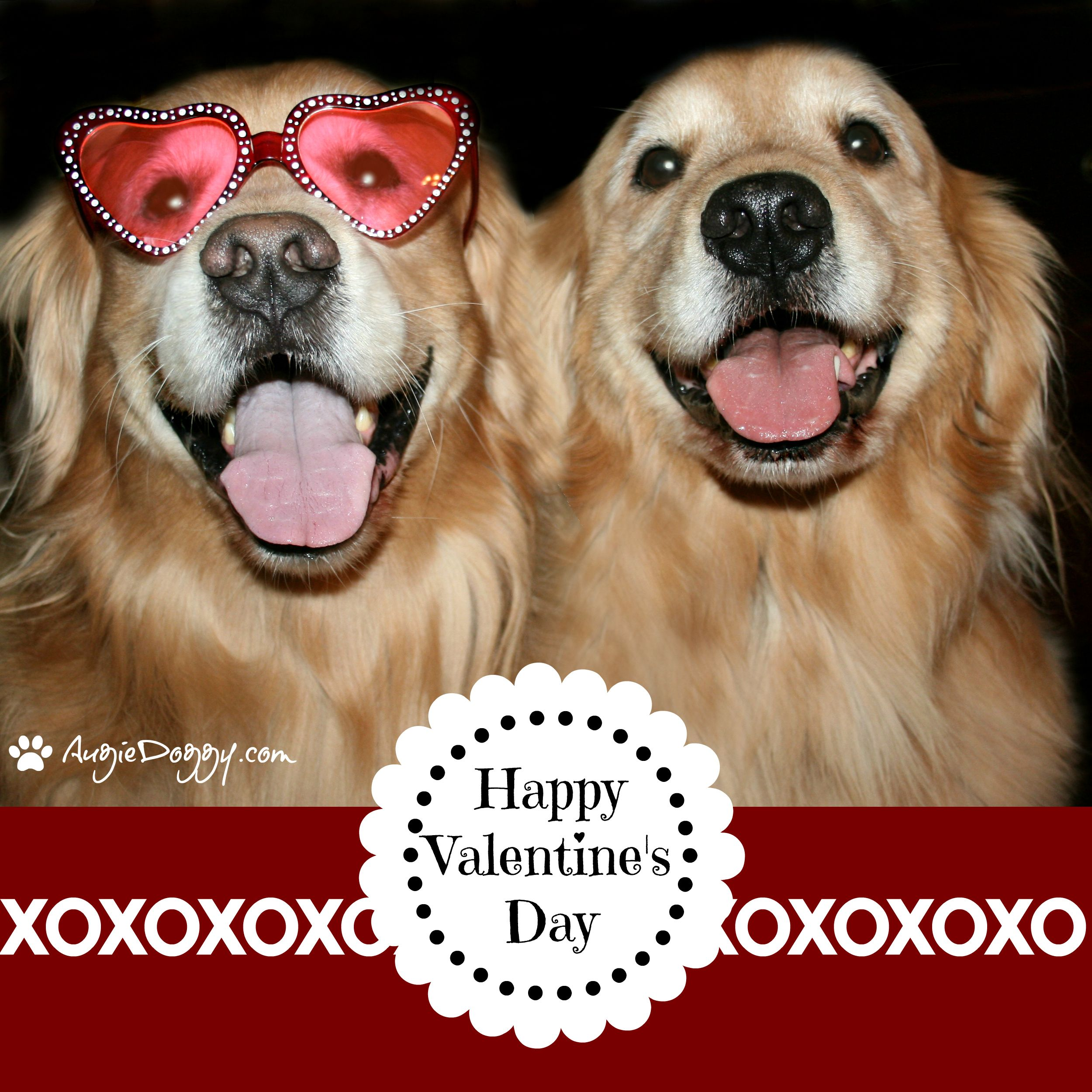 Happy Valentine S Day Pet Holiday Dogs Golden Retriever Golden Retriever