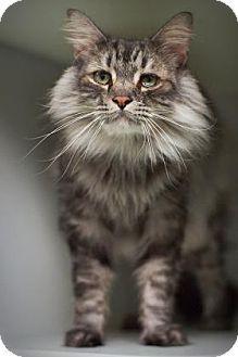 Pin On Adoptable Kitties