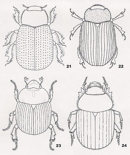 Pin de Reyna Hernandez en museum museo vocabulary | Insectos ...