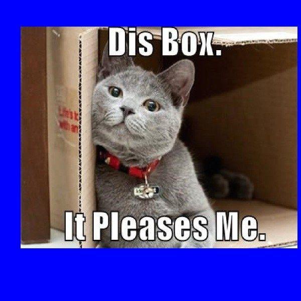 Cat Memes Clean 2018 Funny Cat Memes Cat Memes Clean Cat Memes