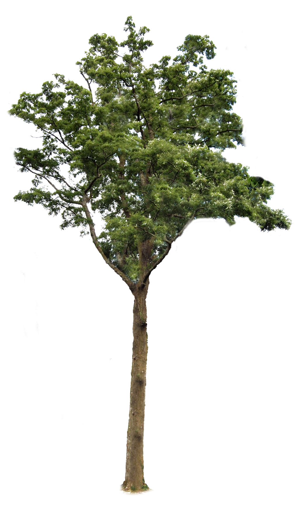 Tree 2 Png By Alz Stock And Art On Deviantart Garden Illustration Trees To Plant Tree