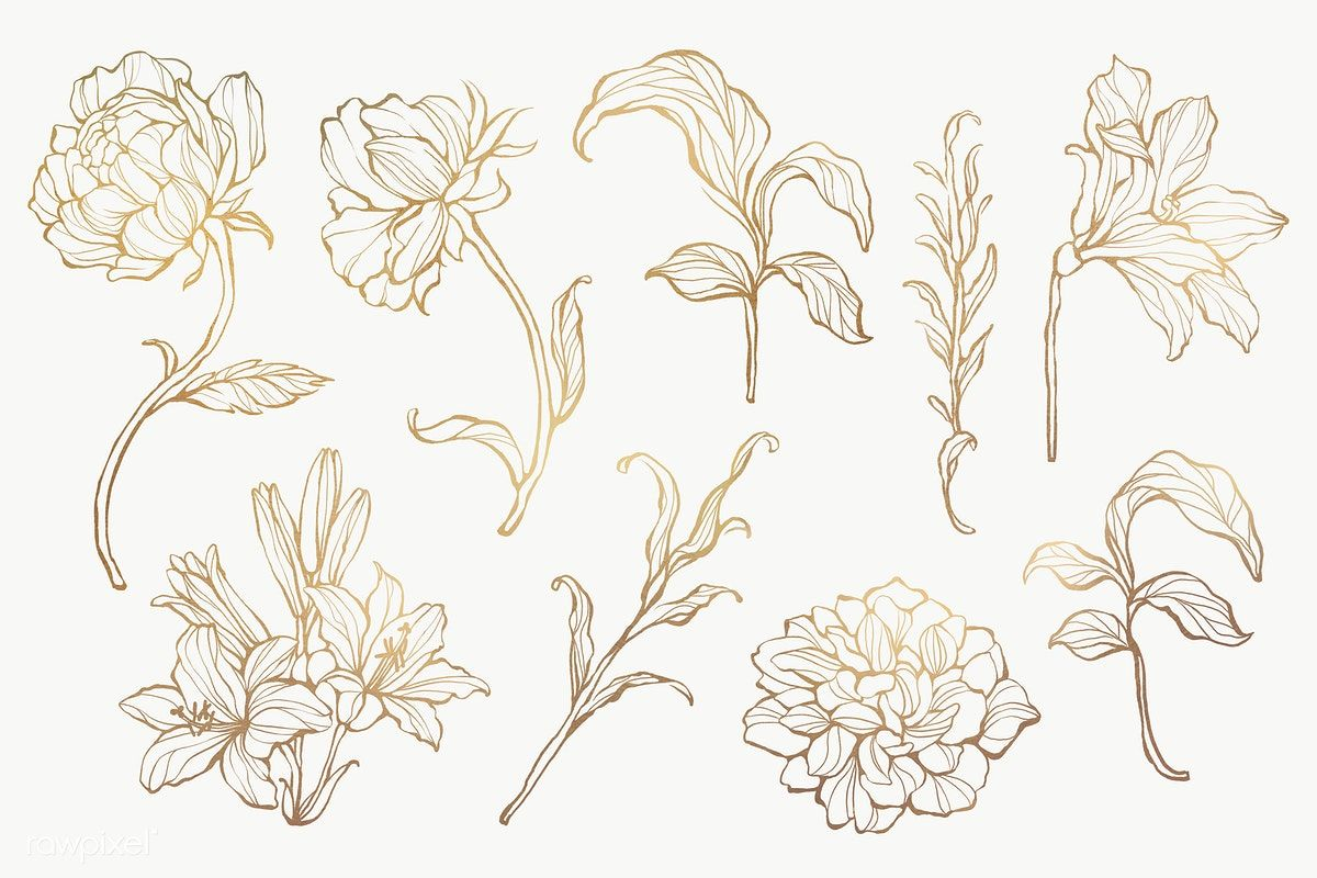 Gold Floral Outline Set Transparent Png Premium Image By Rawpixel Com Nunny Flower Drawing Flower Outline Flower Illustration