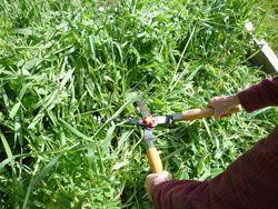 Plant a Fall Cover Crop to Improve Your Garden Soil | Eartheasy Blog
