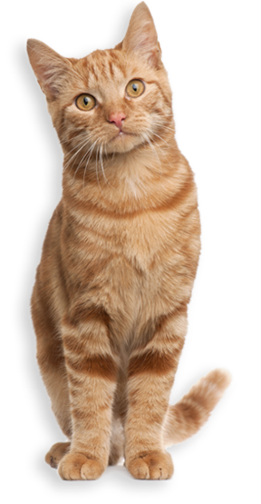Yeast Dermatitis in Dogs (With images) Cat facts, Tabby