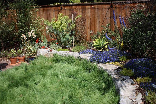 'No Mow' grass | Fab Flora | No mow grass, Grass, Garden on No Mow Backyard Ideas  id=92613