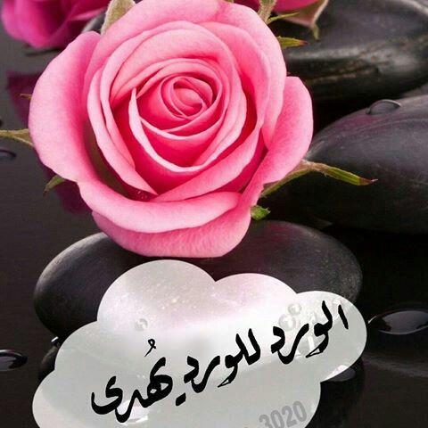 يا احلى ورده Sweet Quotes Love Flowers Flowers