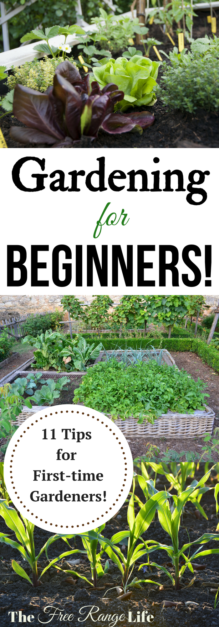 Are you a first time gardener Are you lost on how to a great