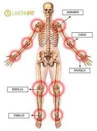 Resultado De Imagen Para Las Articulaciones Del Cuerpo Humano Y